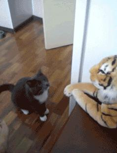 Cat vs plush