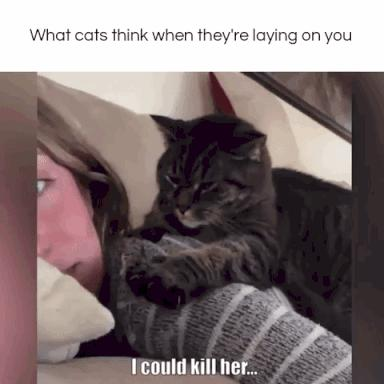 what cats think when they're laying on you 😂