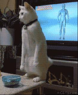 How my cat dance