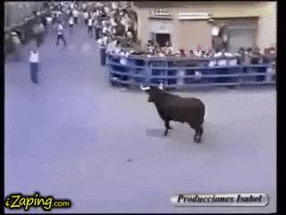 This bull recognize and respect his old owner who sold him