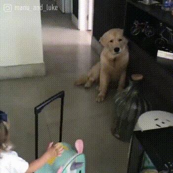 Doggo is sad because tiny hooman has to go to school ☹