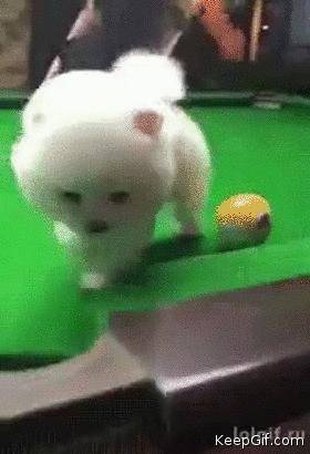 Cue ball in the corner pocket