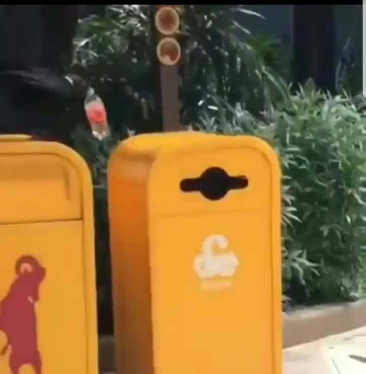 ⁣A bird puts a bottle in the recycling bin