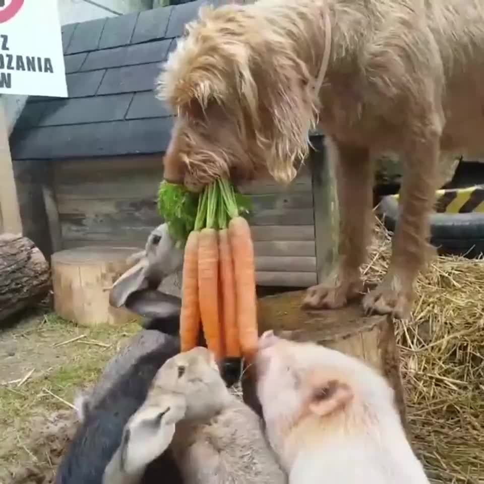 ⁣A dog gives food to his friends