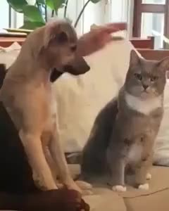 A dog pet his cat