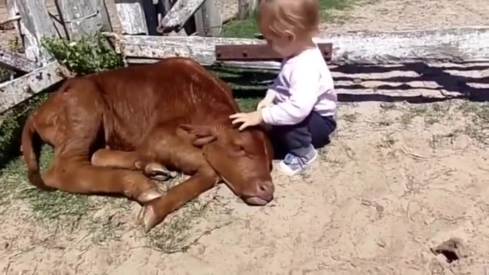 ⁣A kid cuddly baby cow