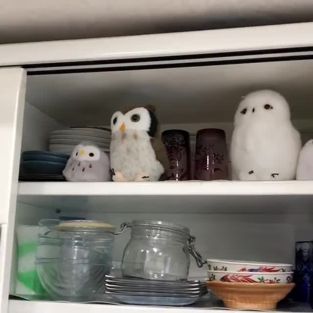 An owl joins his friends on a shelf