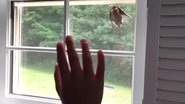 Bat waving hello to a human