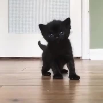 black and tiny kitten