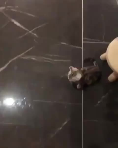 ⁣bouncy ball vs ⁣bouncy kitten