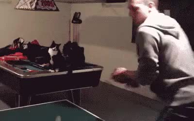 ⁣cat celebrates the victory of ping-pong with his human