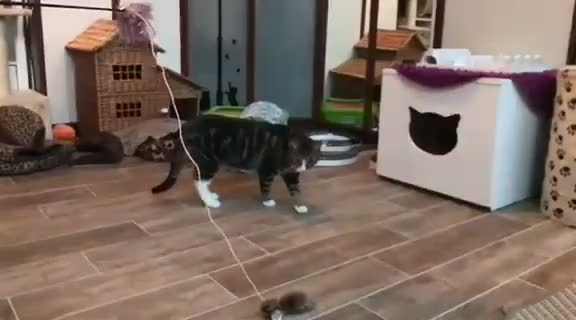 Cat crash
