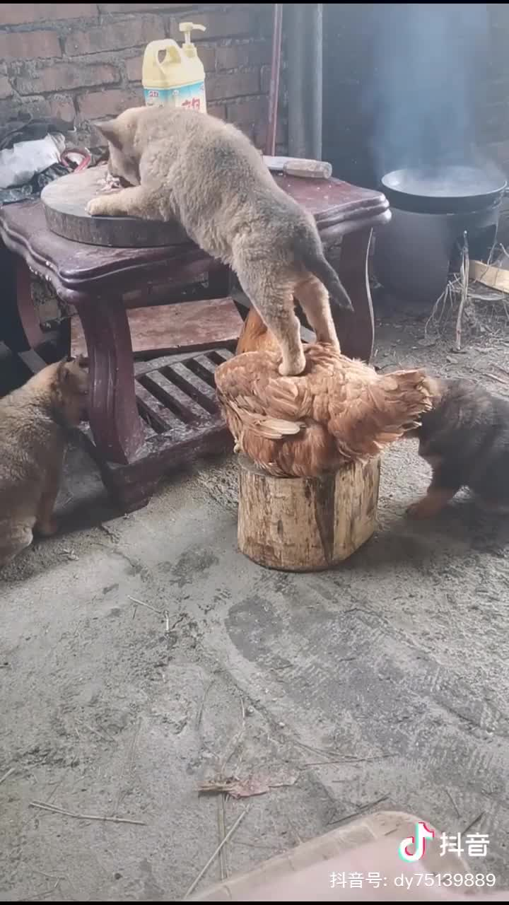 Cat eating his food