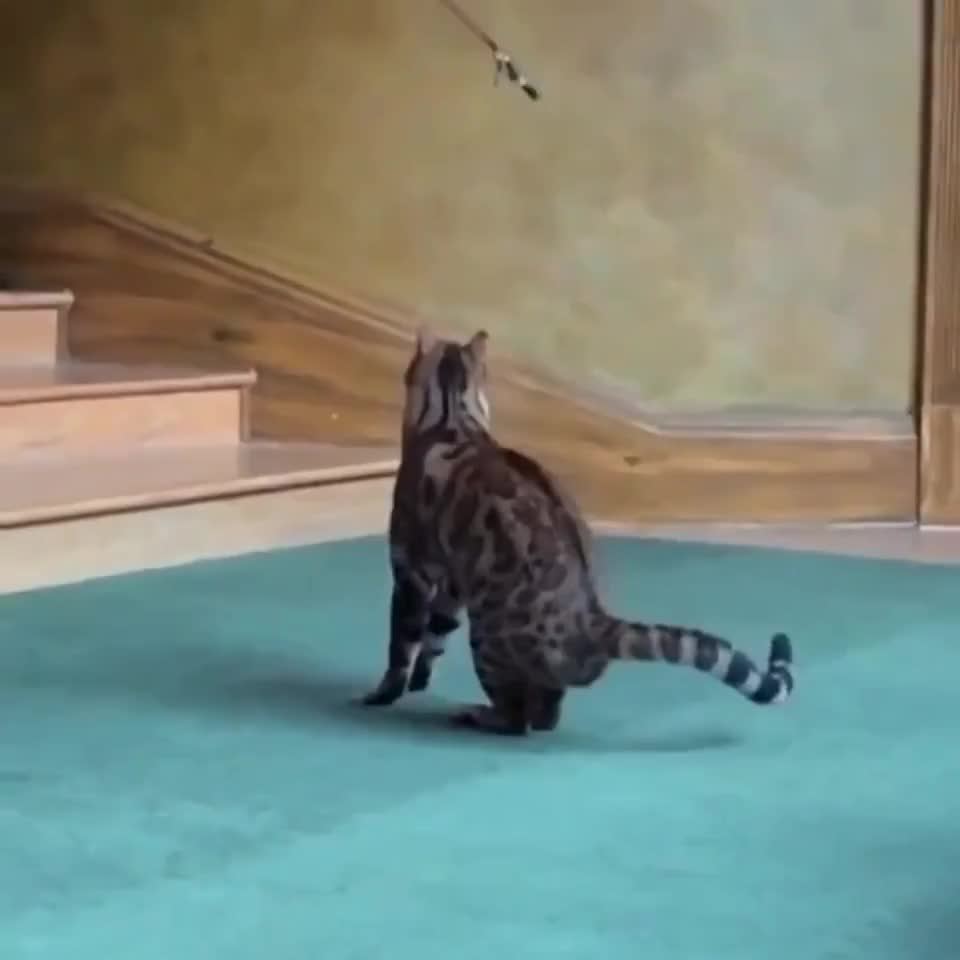 ⁣Cat Jumping in Slow Motion