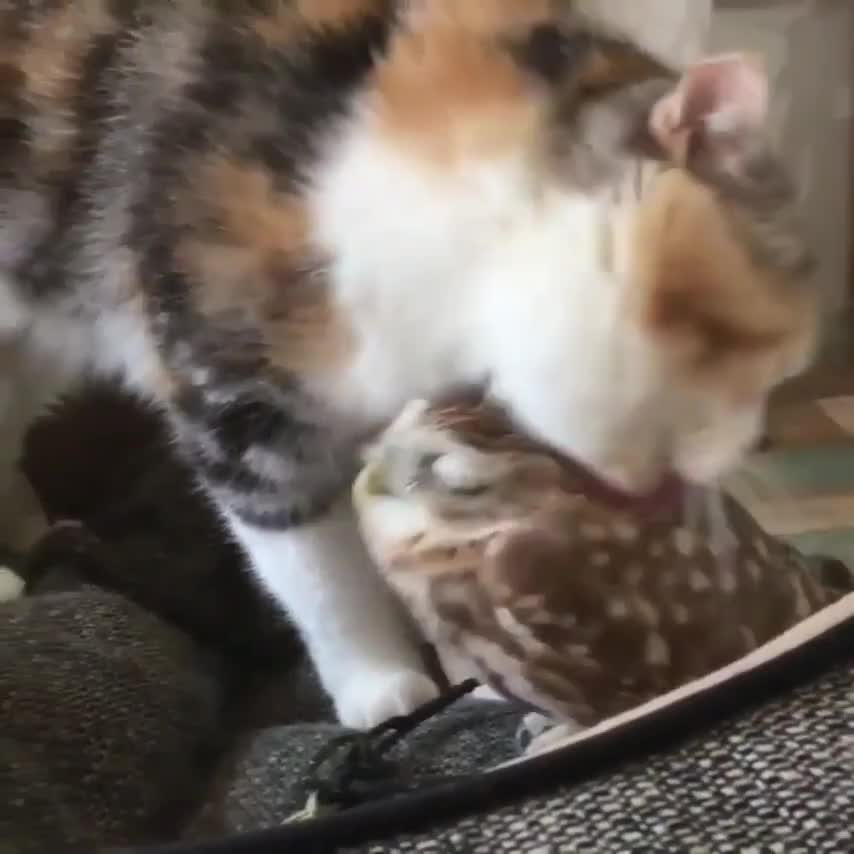 cat loves his friend owl