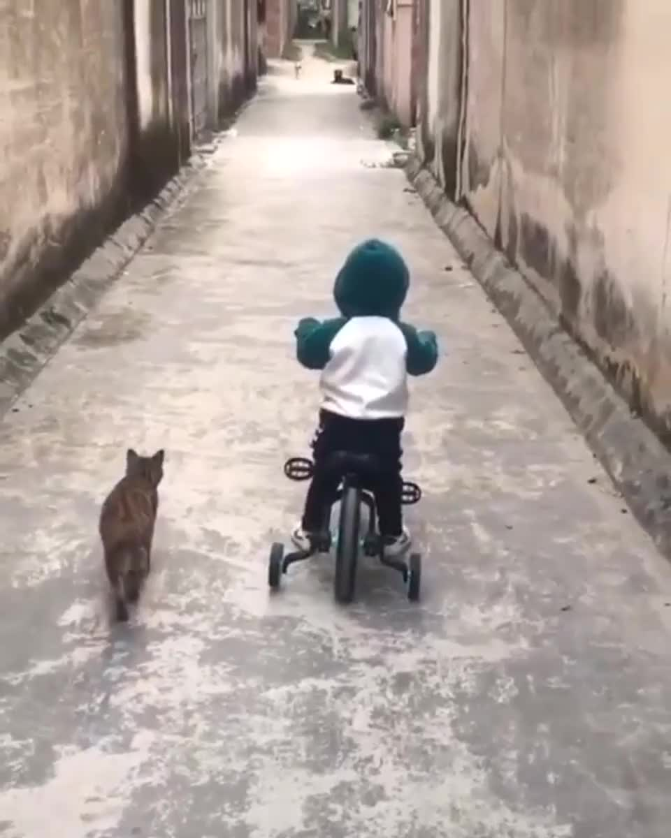 Cat protecting his human