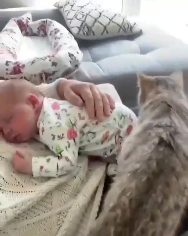 Cat want to ⁣cuddle the baby too