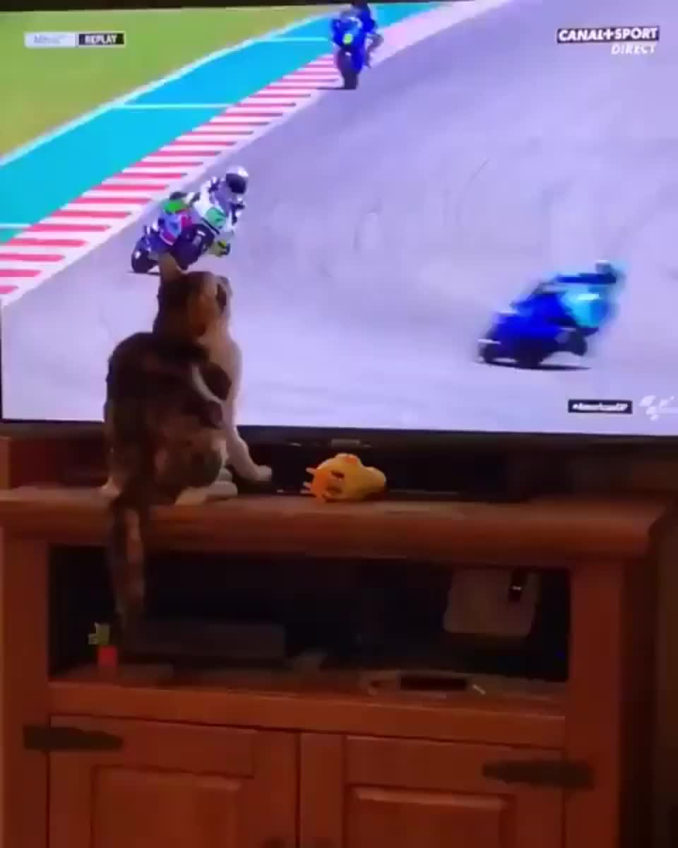 Cat with super power