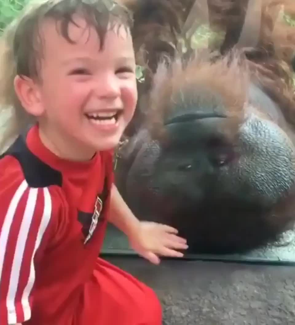 child happy to meat an ⁣orangutan