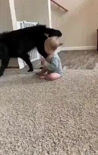 cute and funny dog