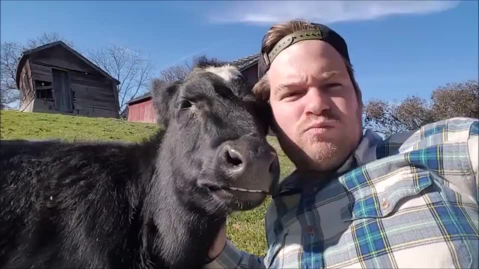 Cute cow with his funny owner