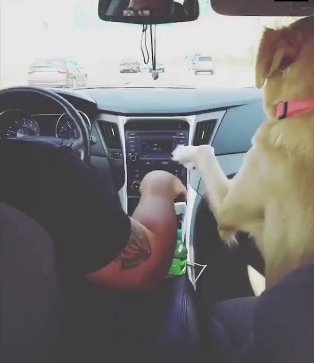 ⁣Cute dog takes the hand of his owner when he drives