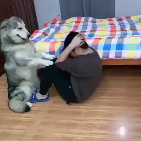 ⁣Dog helping its owner to do exercises
