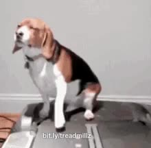 ⁣Dog intense workout on a treadmill