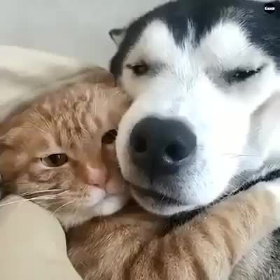 Dog love cat