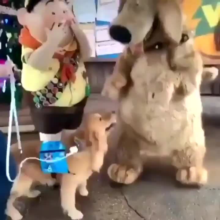 "⁣Dog Puppeteer: ""this is my moment, this is the greatest day of my life"""