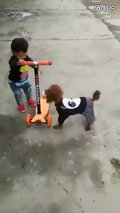 ⁣Dog rides a scooter like a pro.