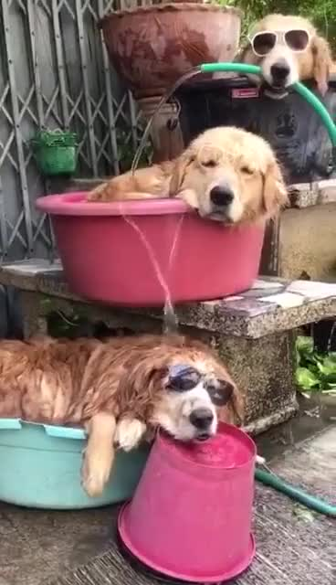 ⁣dog sacrificed running water for the sake of the other dogs