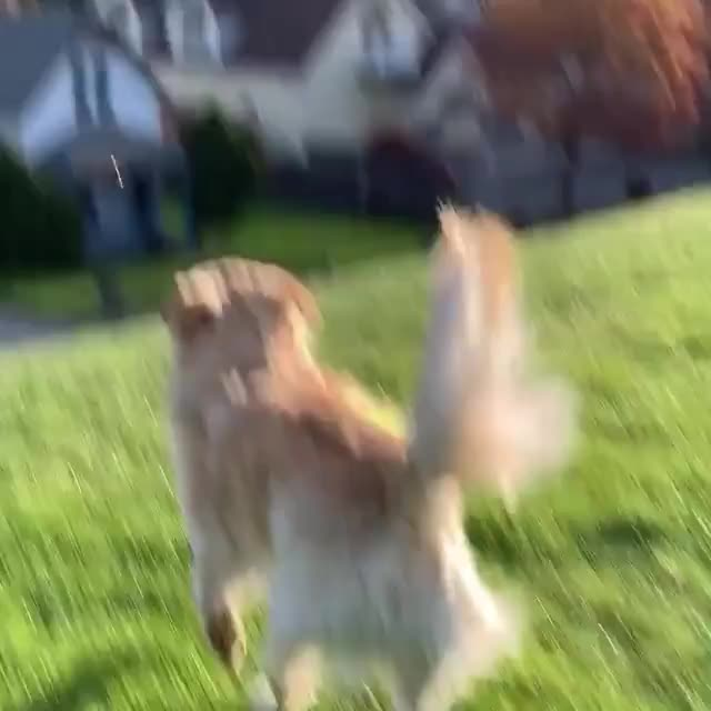 ⁣Dog sliding on grass