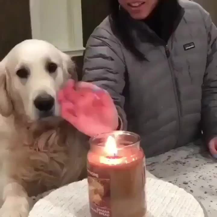 ⁣Dog stop his owner from playing with fire