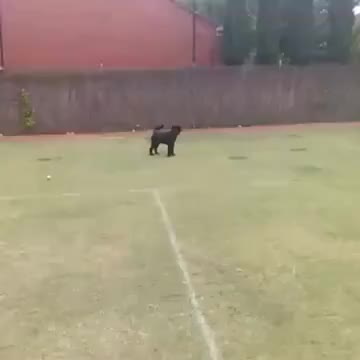 Dog vs tennis net