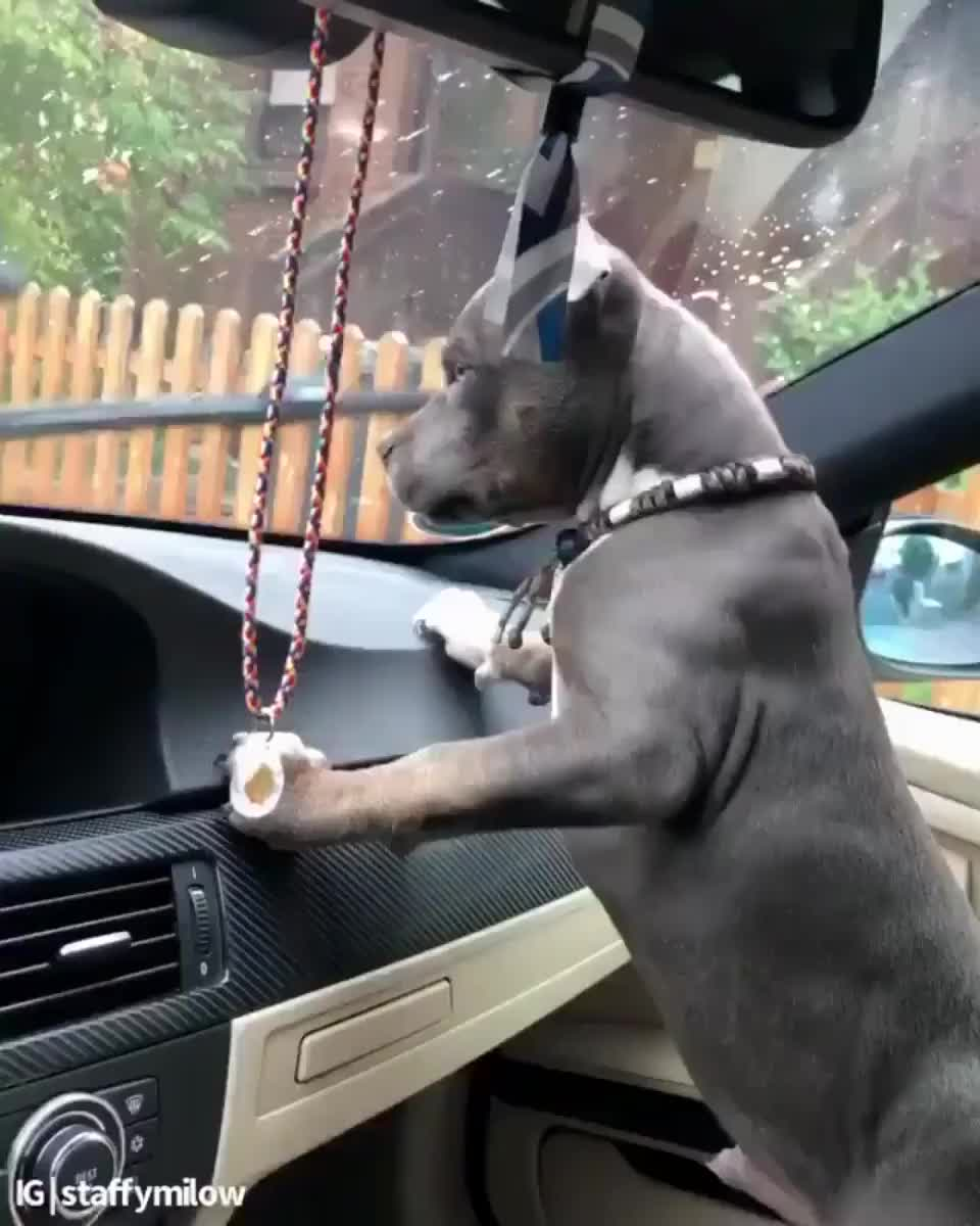 Dog vs ⁣Windshield wiper