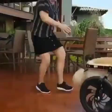 ⁣Dog with wheel chair got a bit excited when he saw the pool