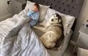 Doggo fall asleep with baby