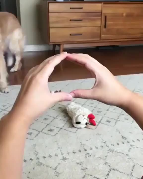 Doggo ⁣tried his best