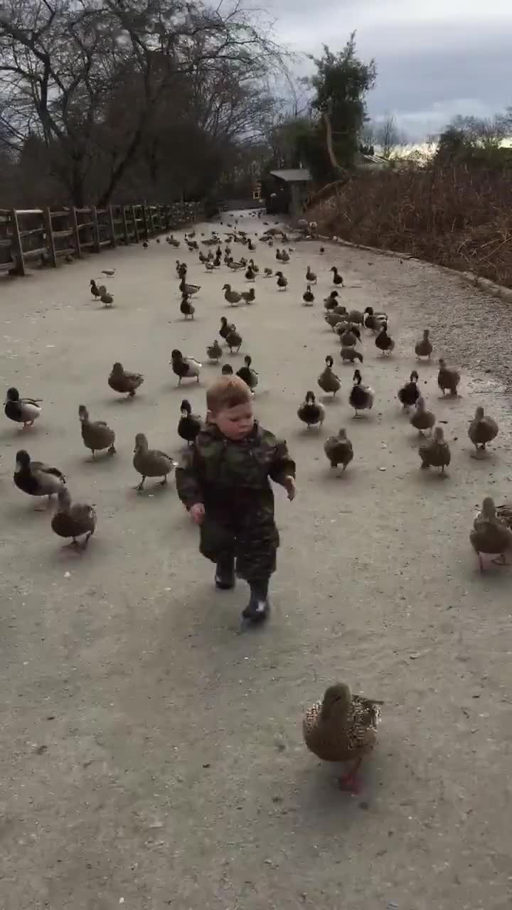 Duck army