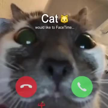 ⁣Face Time netween cats