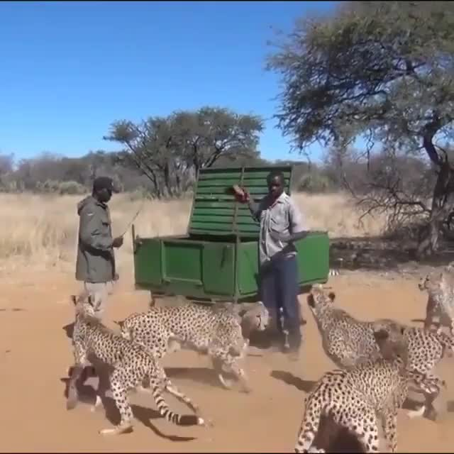 ⁣Feeding some speedycats