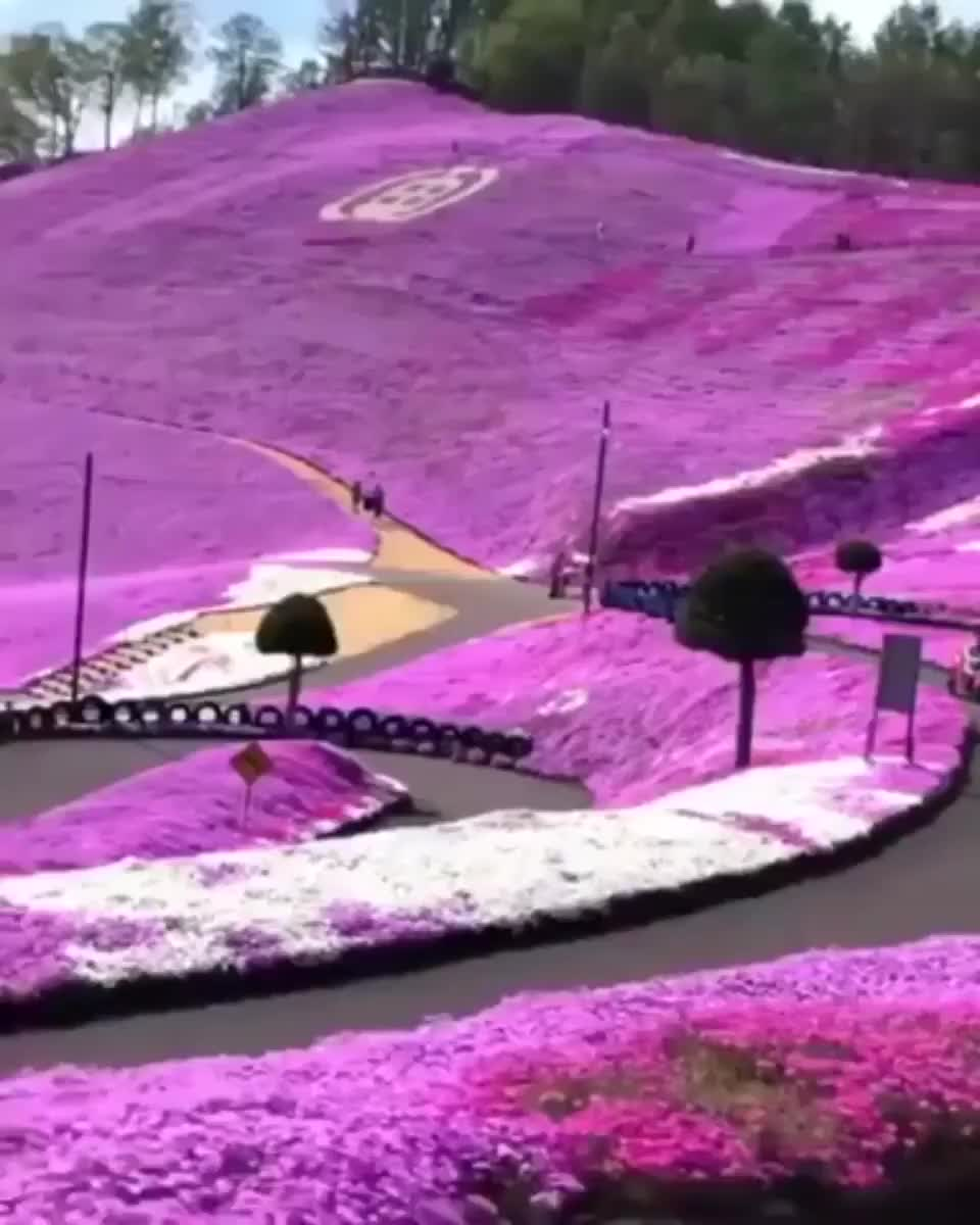 ⁣fields of flowers at Hakkaido Japan