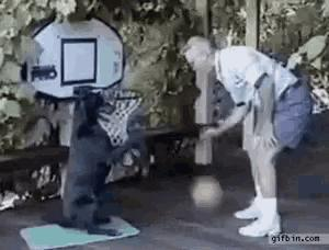Basketball Playing Dog 😂