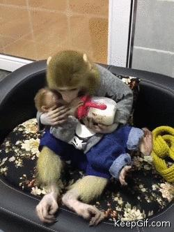 Mom Monkey gives little kisses to her baby while feeding him 😍