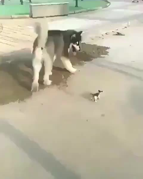 Good boy take his small friend for walk