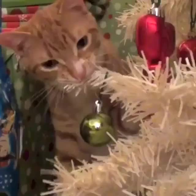 How a cat react when he found a Christmas tree