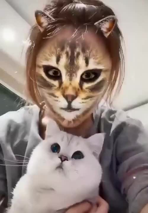 How cat react to cat filter