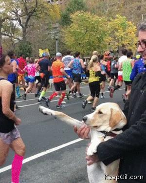 Dog Gives High Fives To Marathon Runners 🐶
