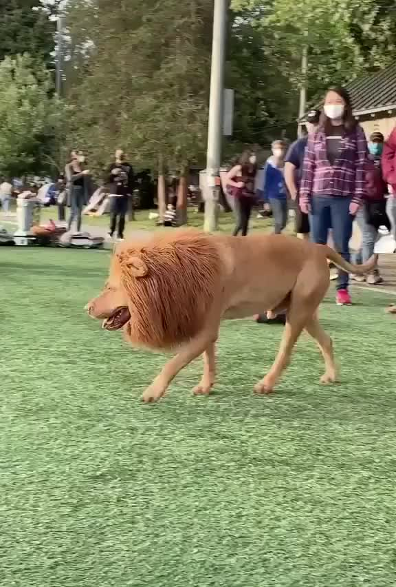 ⁣is that a lion?